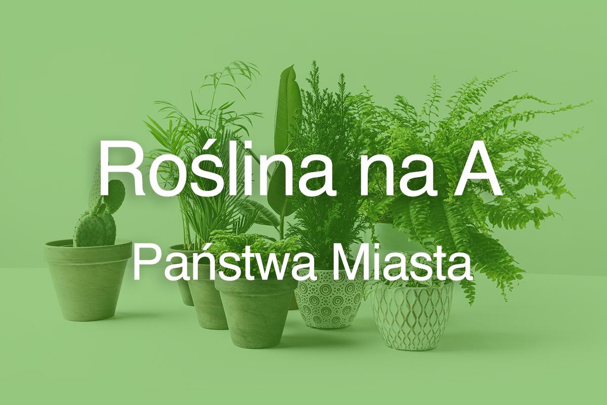 Roślina na A